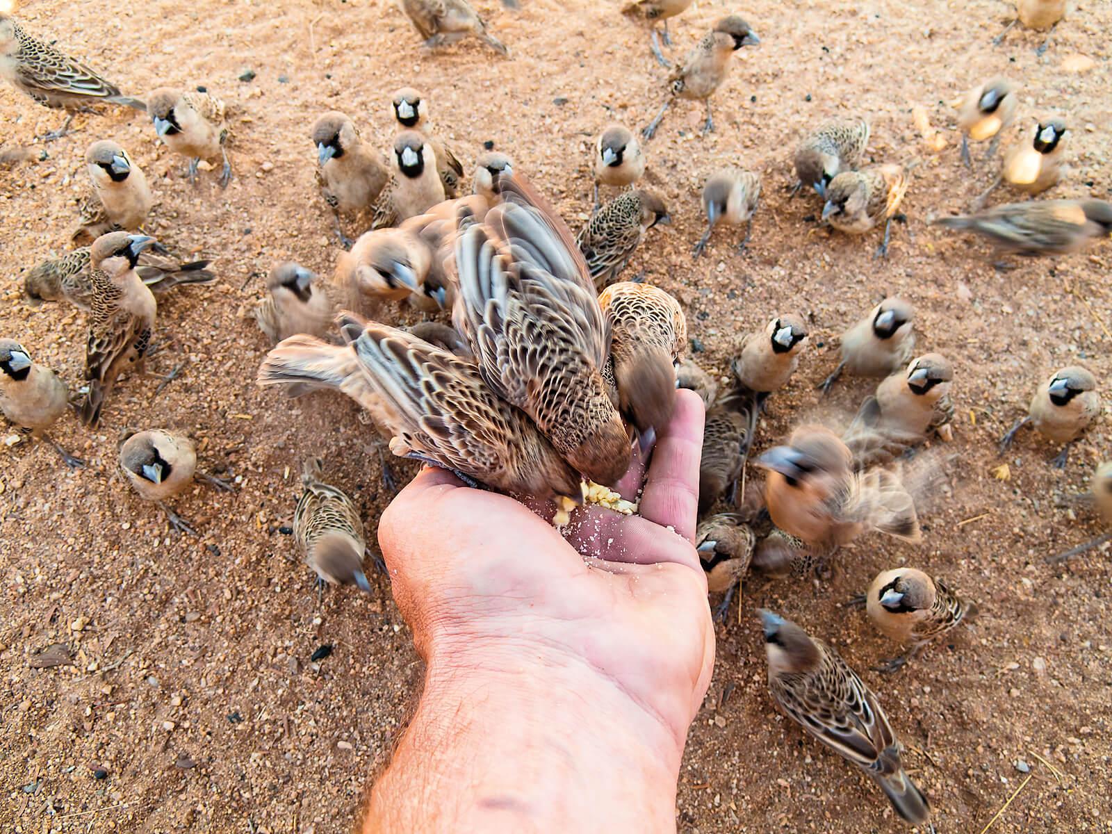 Vincent Mounier Photography  U00bb Namibia Animals