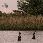 Broad Channel, Jamaica Bay, Queens – Wild at Heart but City in Sight