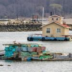 Pelham Bay Signs of Life