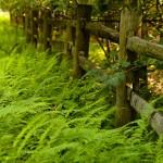 Exploring the Pennsylvania Woods