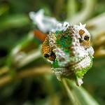 Constantia Chameleons – 2012 Pilgrimage