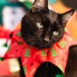 Christmas Cat, Happy