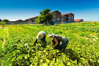 Abalimi Bezekhaya – Township Urban Micro-Farming