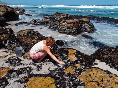 Picking South African mussels at Misty Cliffs