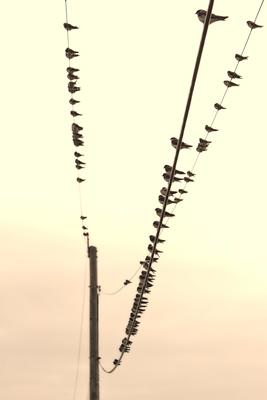 Cape Ann birds