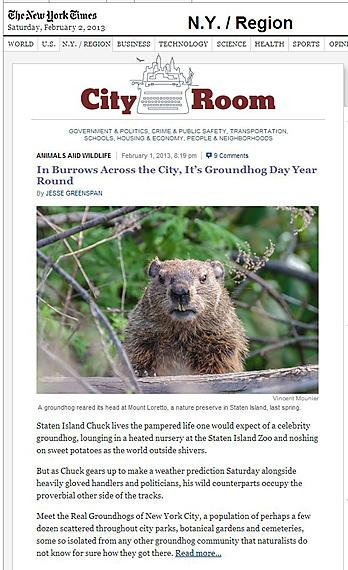 nyt-cityroom-groundhog_sm