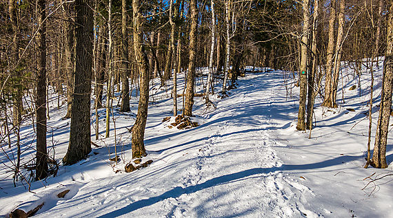 A Trail Run in Immaculate Snow