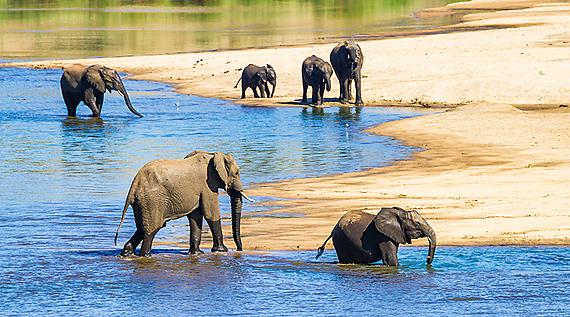 Slingshot to Kruger, Part 6 – Predominant Mopane Syndrome