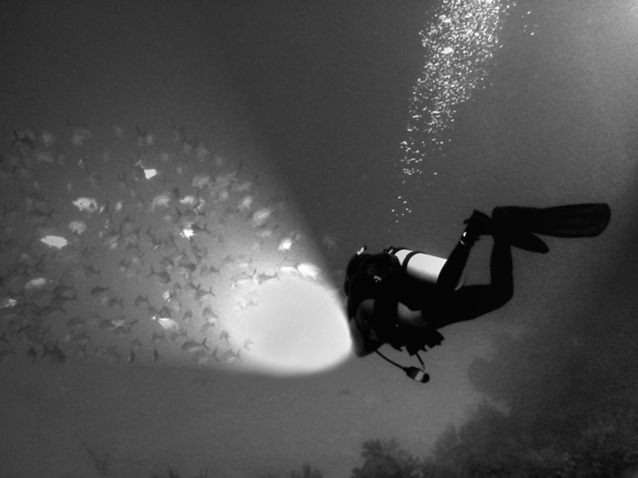 An Intro to Night Diving