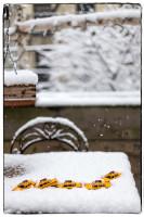 If It Is March, It Must Be Winter