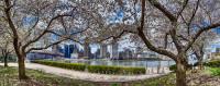 Spring on Roosevelt Island