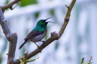 South African Birds 'n Things