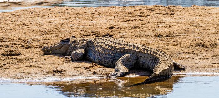 Kruger Animals